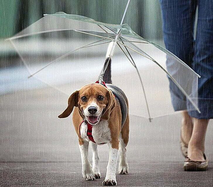 Это не мужской зонт, но столь практичная идея дизайнера, по-моему, тоже заслуживает внимания