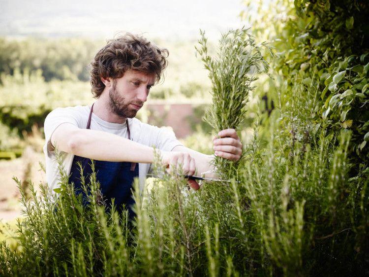 Основной составляющей вермута является полынь, с древних времен известная человечеству в качестве лечебного растения