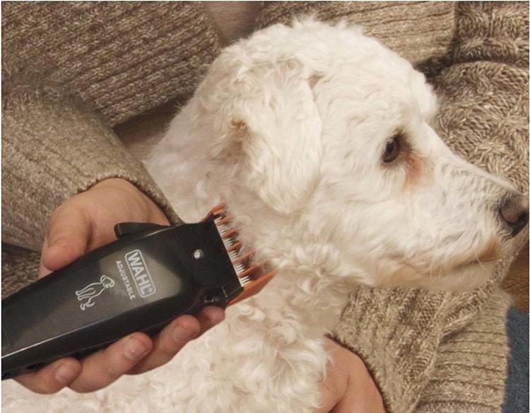 WAHL выпускает всю линейку парикмахерского инвентаря, в том числе и для ухода за животными